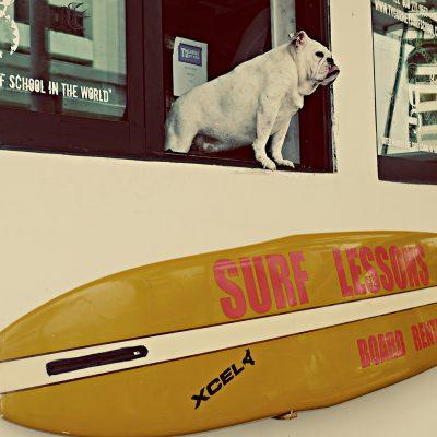 TY Gurney Surf School, Honululu
